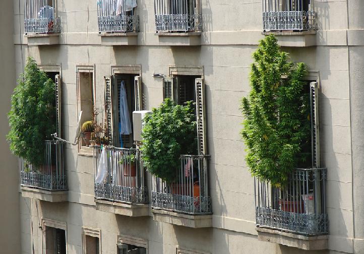 Faire-pousser-cannabis-interieur-barcelone